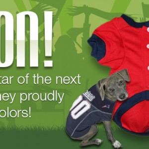 Pet Jerseys for New England Teams!