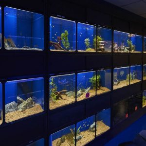 Aquatics section at Friendly Pets, Exeter, NH