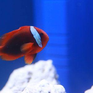 Saltwater Fish at Friendly Pets, Seacoast NH