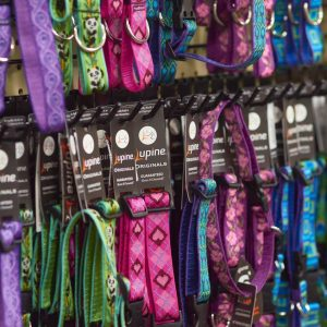 Lupine collars at Friendly Pets