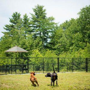 Dogs enjoying the Friendly Pets Dog Park