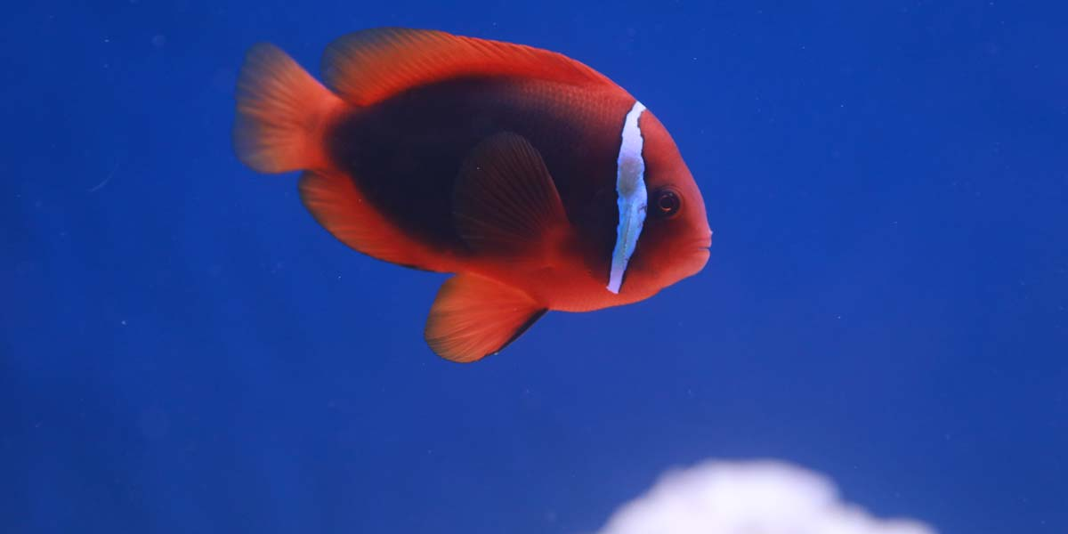 A Saltwater Fish at Friendly Pets in Exeter