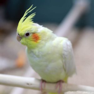 A Bird at Friendly Pets, Exeter location