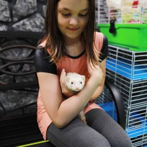 Young girl with a ferret at Friendly Pets, Exeter
