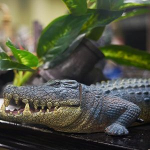 Aquarium accessories at Friendly Pets