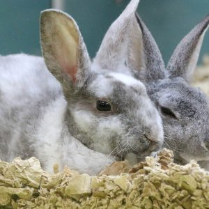 Live Bunnies at Friendly Pets, Pet Supply Stores in Exeter and Lee, NH