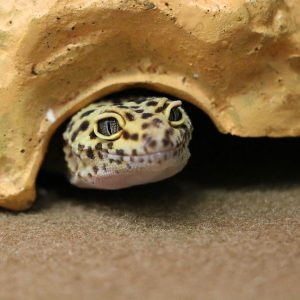 Reptiles at Friendly Pets, Pet Supply Stores in Exeter and Lee, NH