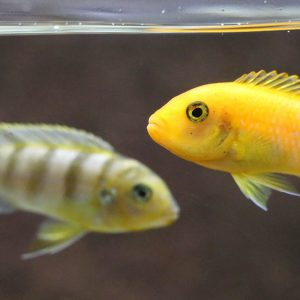 Tropical Fish at Friendly Pets in Lee, NH